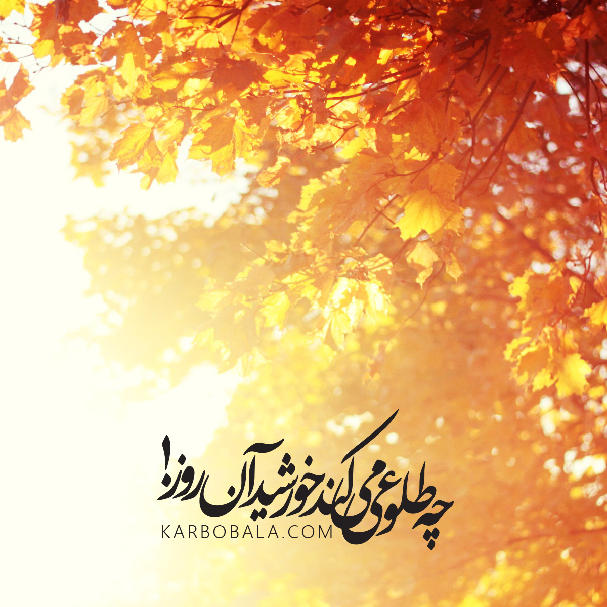 Mobile_Wallpaper(186)-Karbobala.com